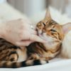 短編小説ショートショート「ばかにつける猫」